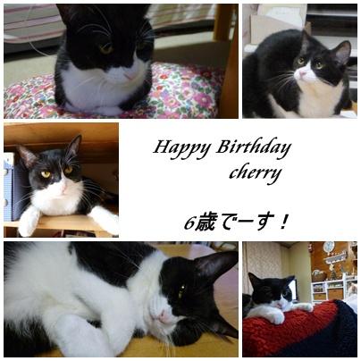 チェリー6歳