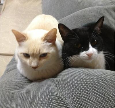 モモ&チェリー