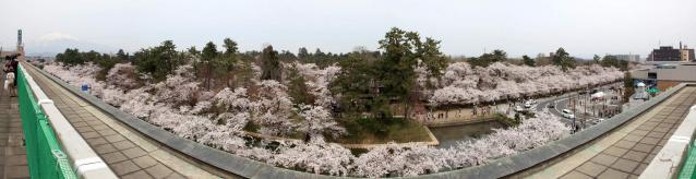 弘前公園 桜 2012年