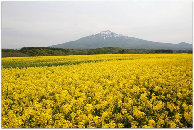 菜の花畑 鰺ヶ沢町