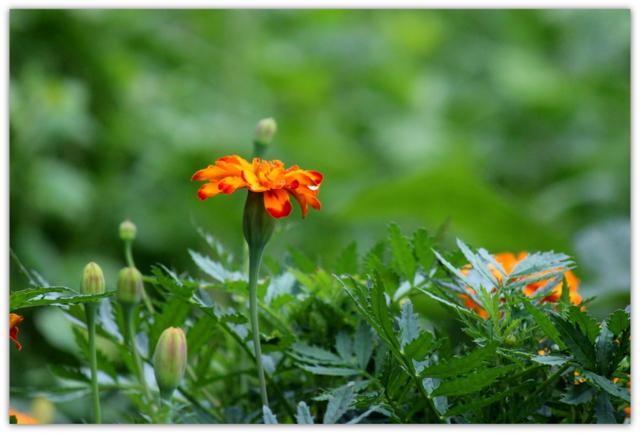 花 はな ハナ 写真