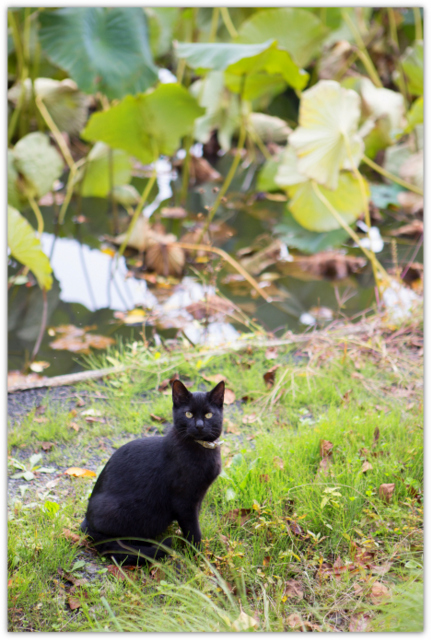 ネコ ねこ 猫 動物 写真