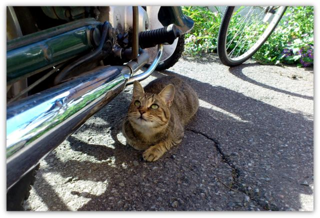 猫 ネコ ねこ 写真 動物