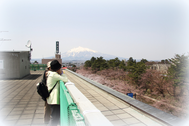 弘前公園 桜 2012年 弘前市役所