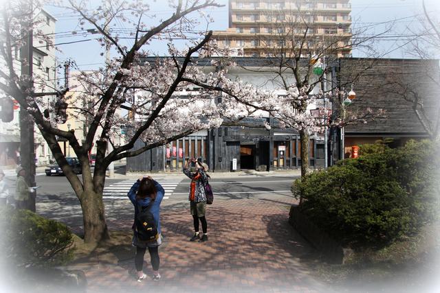 弘前 桜 2012年