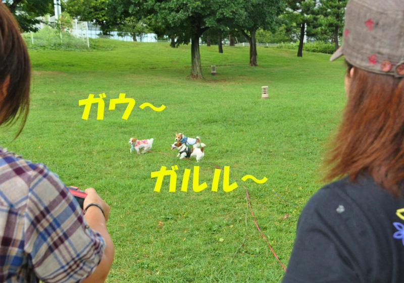 120912- (5)のコピー