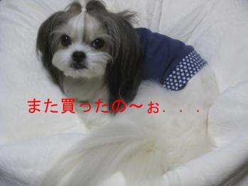 IMG_7457-201309.jpg