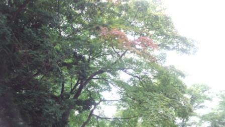 北大構内 (4)