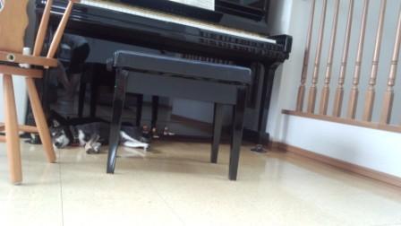 ピアノの武蔵 (2)