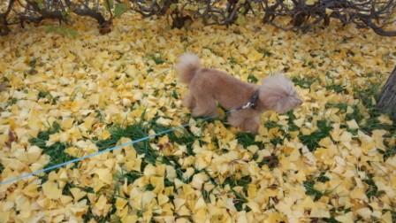 落ち葉の散歩 (3)