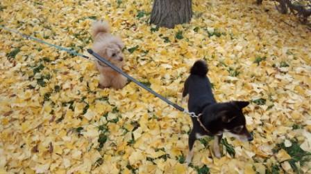 落ち葉の散歩 (4)