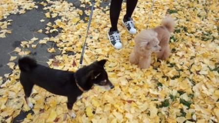 落ち葉の散歩 (5)