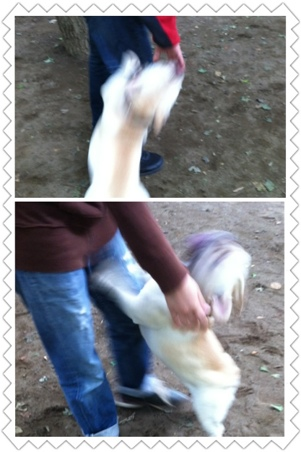 fc2blog_20120625163041b6f.jpg
