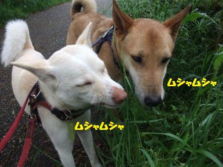 2012_0504_3.jpg