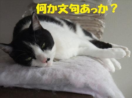 2012_0930_3.jpg