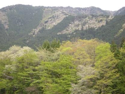 2-1新緑の山