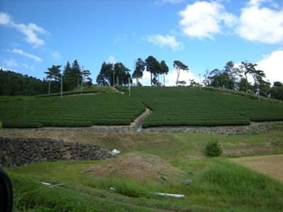 4-2茶畑