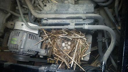5 鳥の巣