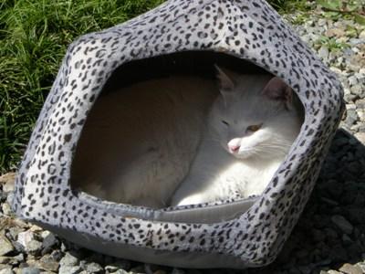 3-6ネコ小屋のシロ