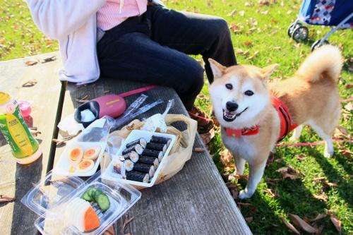 エコパでピクニック