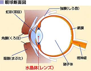 image_gankyu.jpg