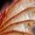 古代エルキュロスの翼の欠片