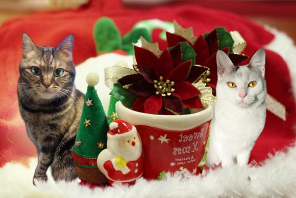 クリスマス++