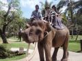 ⑮象に乗る