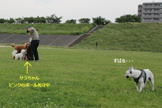 IMG_0815のコピー