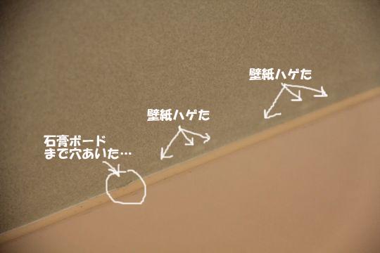 IMG_7105のコピー