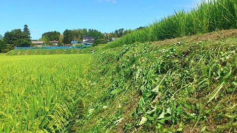 急斜面の草刈り