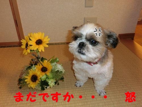 001-20120627-102725.jpg