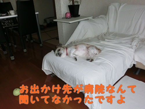 001-20120918-184419.jpg