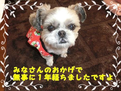 001-20121217-102546.jpg