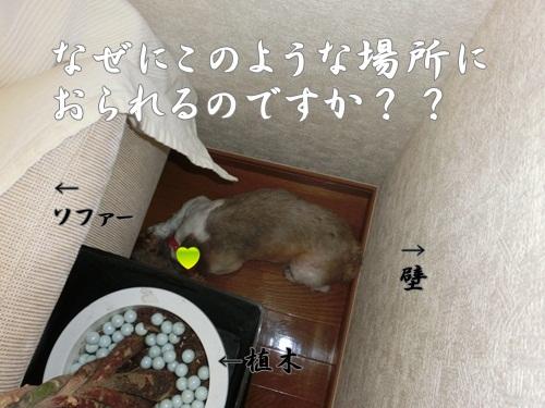 002-20120731-111832.jpg
