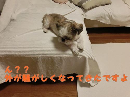 002-20120810-095618.jpg