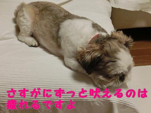 003-20120810-095619.jpg