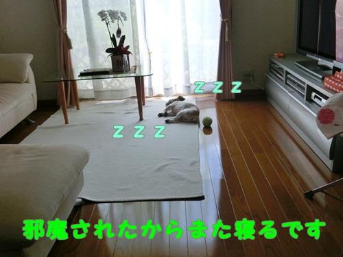 003-20120903-123536.jpg