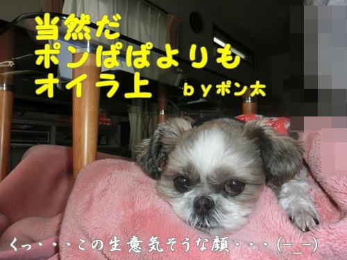 005-20121217-102550.jpg