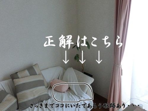 007-20120731-111833.jpg
