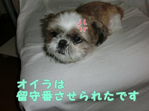 010-20120819-171309.jpg