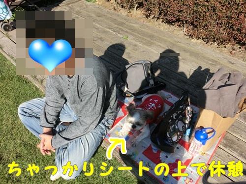 011-20121104-201824.jpg