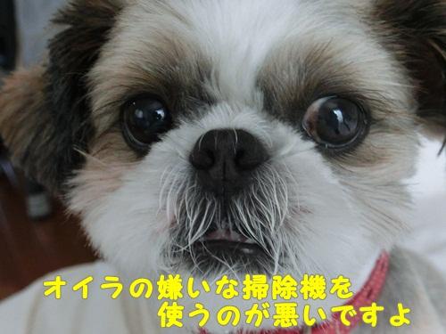 111-20120903-164403.jpg