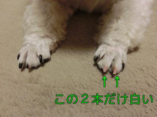 bhFndhDl51PRkGF.jpg