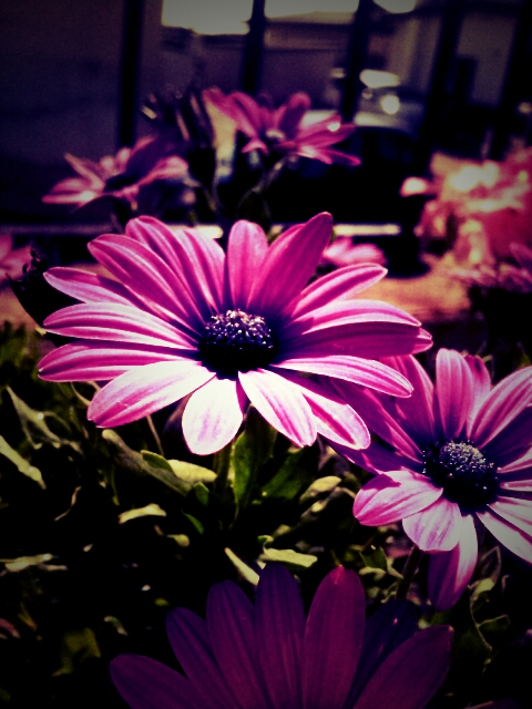 PicsArt_1345530009518.jpg