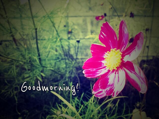 PicsArt_1350428198349.jpg