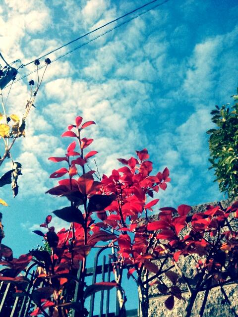 PicsArt_1352161488011.jpg