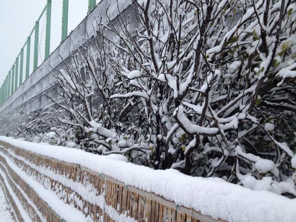 茅ヶ崎雪景色140208c