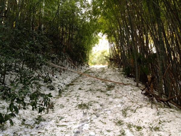 茅ヶ崎雪景色140209b