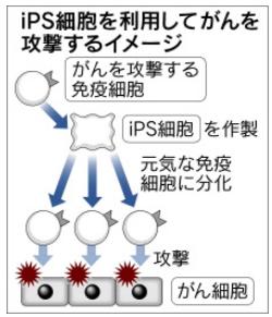 iPS利用の癌治療図